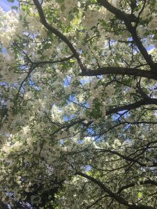Thinking Out Loud – Spring